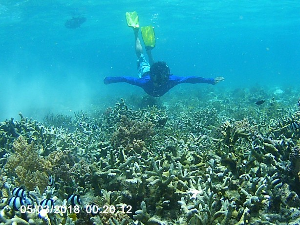 Diving Pulau Menjangan Taman Nasional Bali Barat